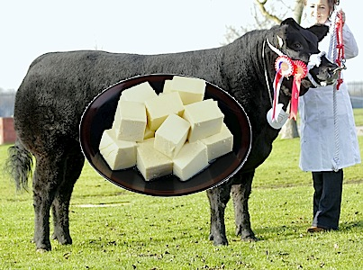 Tofu Fed Beef